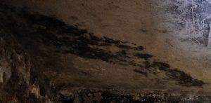 moisissures plafond