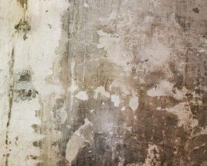 Moisissures murs
