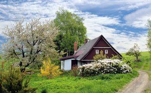 distance arbre maison