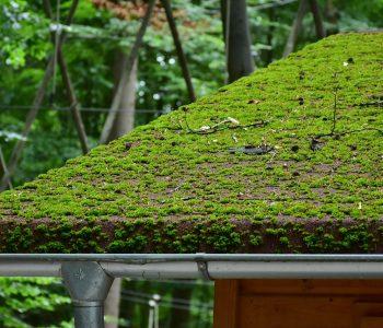 toiture végétalisée structure charpente étanchéité